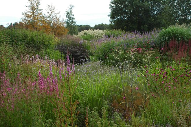 The Wave Garden at Pensthrope Waterfowl Park, Norfolk, United Kingdom