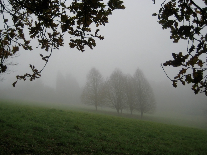 fog meadow