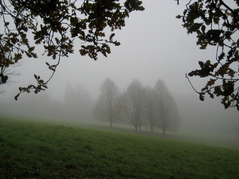 fog meadow
