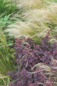 Nasella tenuissima and Sedum 'Purple Emperor'