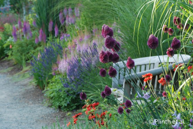 The garnet orbs of Allium sphaerocephalon rise above the crimson blanket flowers, while the soft pinks and blues can be seen in the background.