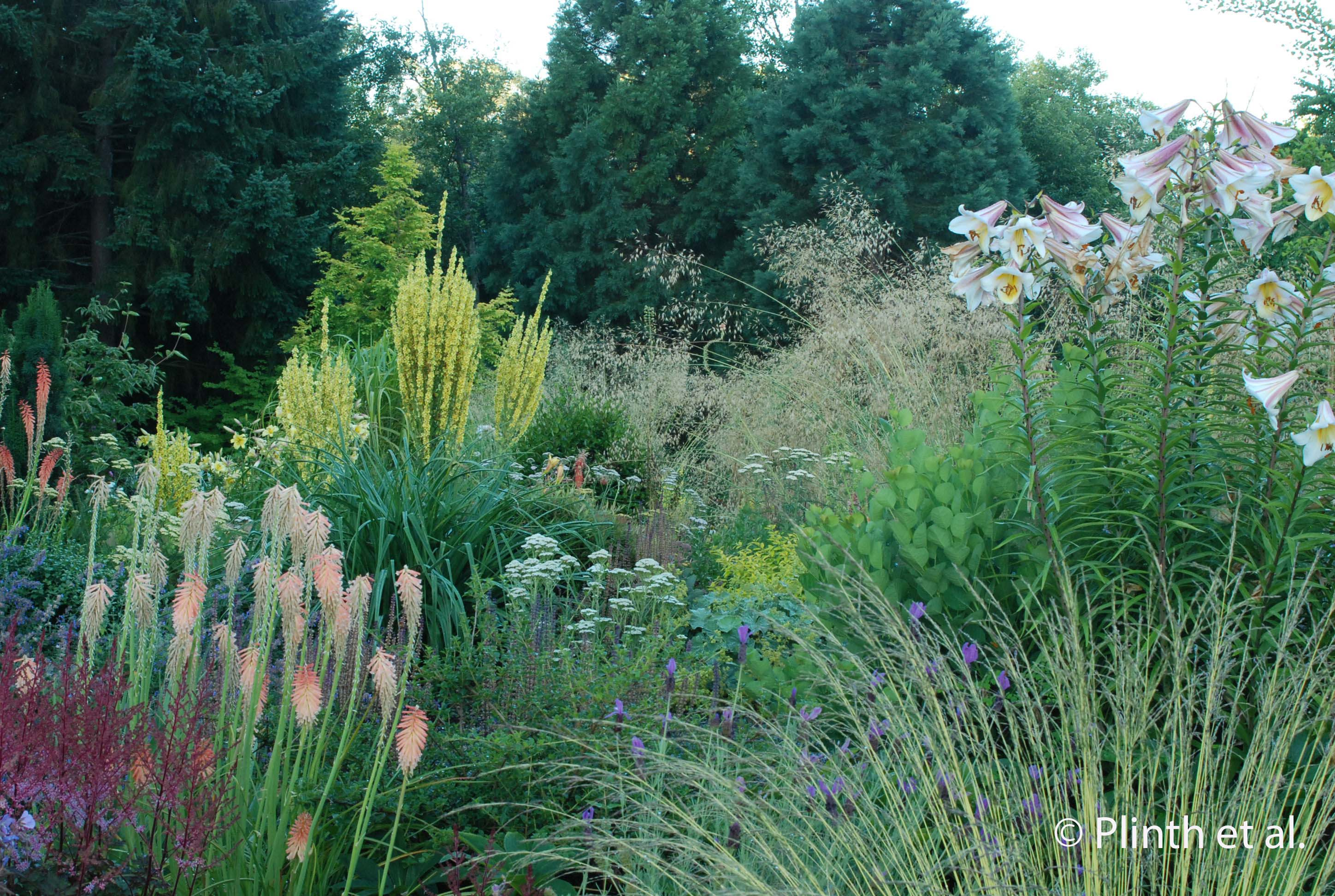 Northwest perennial alliance plinth et al for Tall border grass