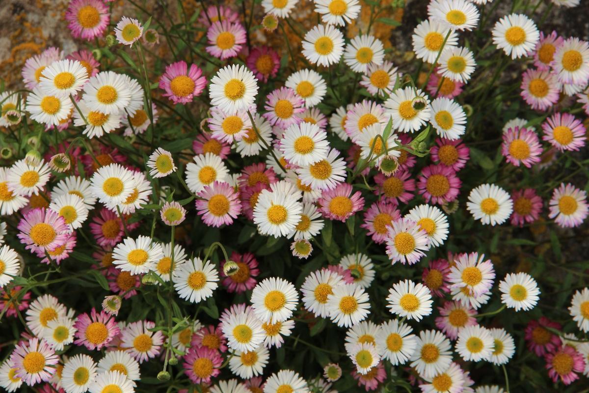 Wall flowers at Gravetye – Plinth et al