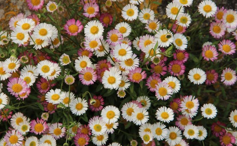 Wall flowers atGravetye