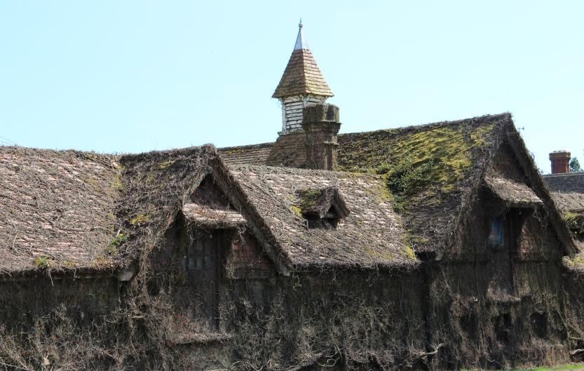 Vine covered house