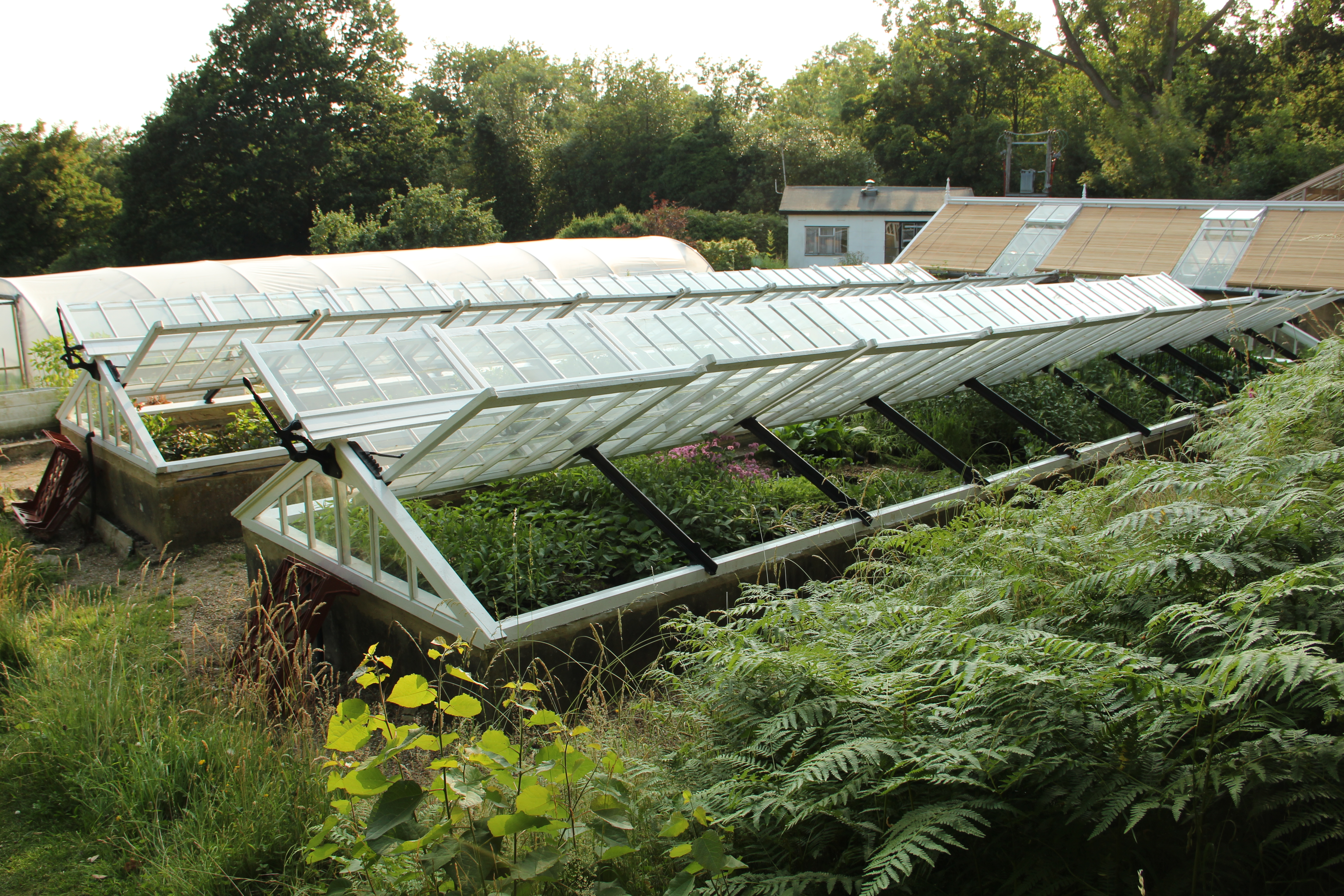 special the type of cold frame