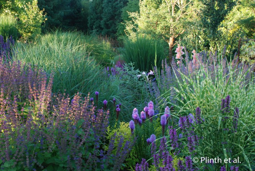 In the low evening light, the purples glow with surreal intensity, only tempered by the greens from the grasses.