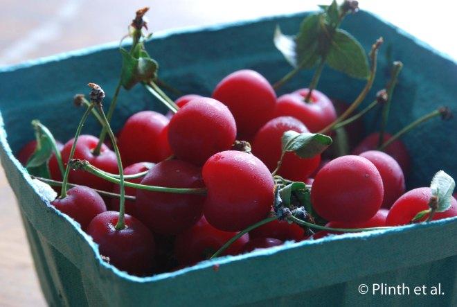 Sour_Cherries3Watermarked