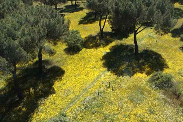 Casa de Campo wildflowers
