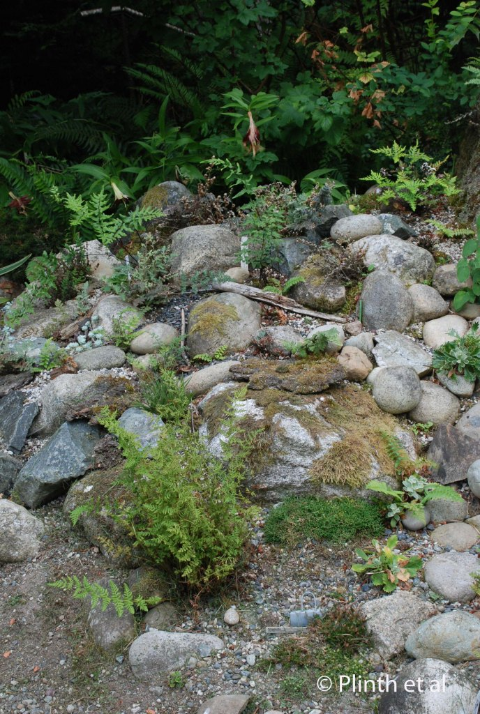 Dry and sunny, the rock garden allows the Riehls to cultivate ferns requiring sharp drainage, specific pH, and more light.