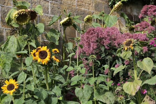 Gravetye cut flowers