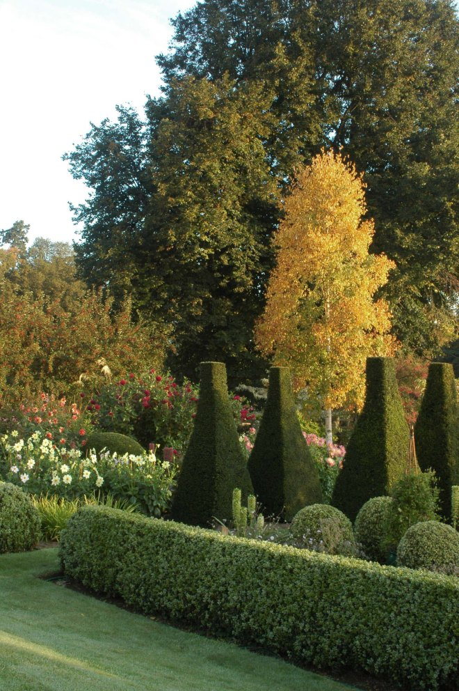 A Betula ermanii is a pillar of gold, echoing the beautifully clipped yew topiaries.