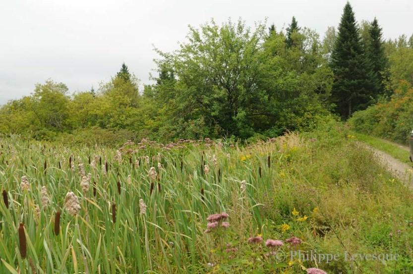 Fields near the nursery