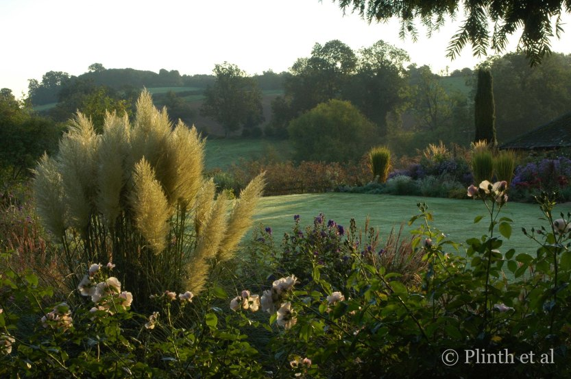 Cortaderia selloana 'Pumila' (pampas grass) and Rosa 'Sally Holmes' play off each other in the morning light. The borders here embrace and blend into the landscape.