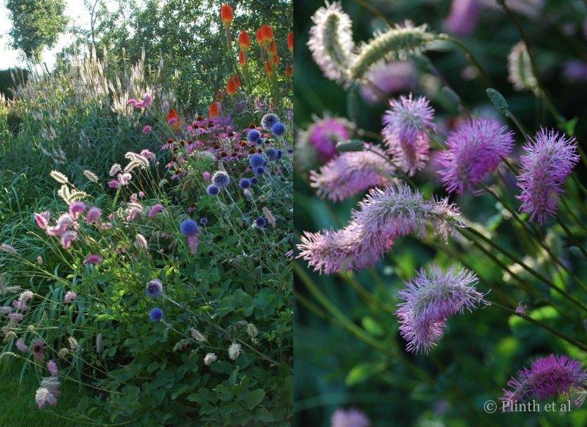 Left: Gustav Klimt Border; Right: Sanguisorba obtusa (Japanese burnet)