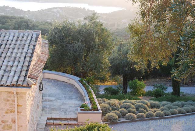 Olive trees and cotton lavender dictate the type of plants suited for the Corfu garden.
