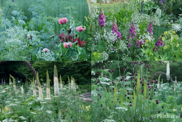 Ammi majus is a stellar player in different ensembles in the Cut Flower Garden. Top left clockwise: Papaver somniferum; Digitalis purpurea and Nicotiana 'Lime Green'; Cirsium rivulare 'Atropurpureum', Eremurus 'Spring Valley Hybrids'; Eremurus x robustus