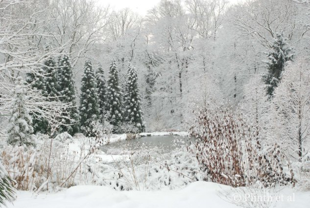 The Pond Garden in Snow at Chanticleer