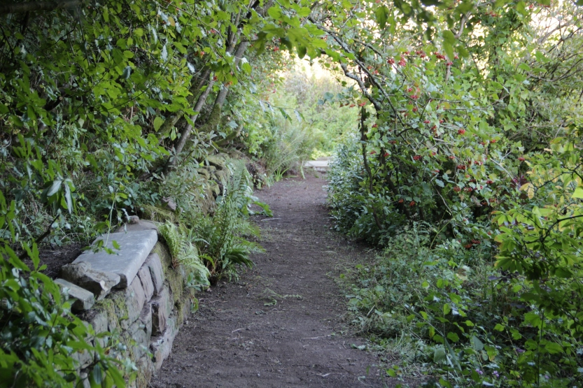a different path of bare earth in the informal Spring Garden, at Gravetye Manor, 2013