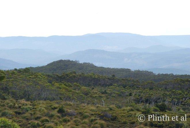 Looking across the subalpine vegetation towards the mountains.