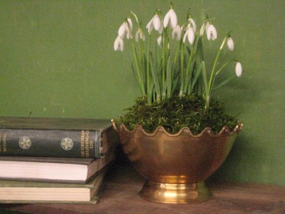 Snowdrops, Galanthus display