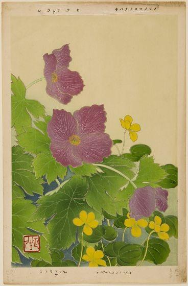 Pink Japanese Glaucidium (Shirane-aoi) and Yellow Kibana no komanotsume (Viola biflora), Meiji period, circa first decade of 20th century (Image courtesy of Harvard Art Museums/Arthur M. Sackler Museum)