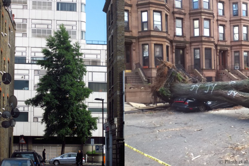 single tree adorning the end of a London Street and Hurricane Sandy damage, Brooklyn, NY (photo: Migan Foster)