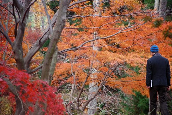 Steinhardt Gardens Mt Kisco NY