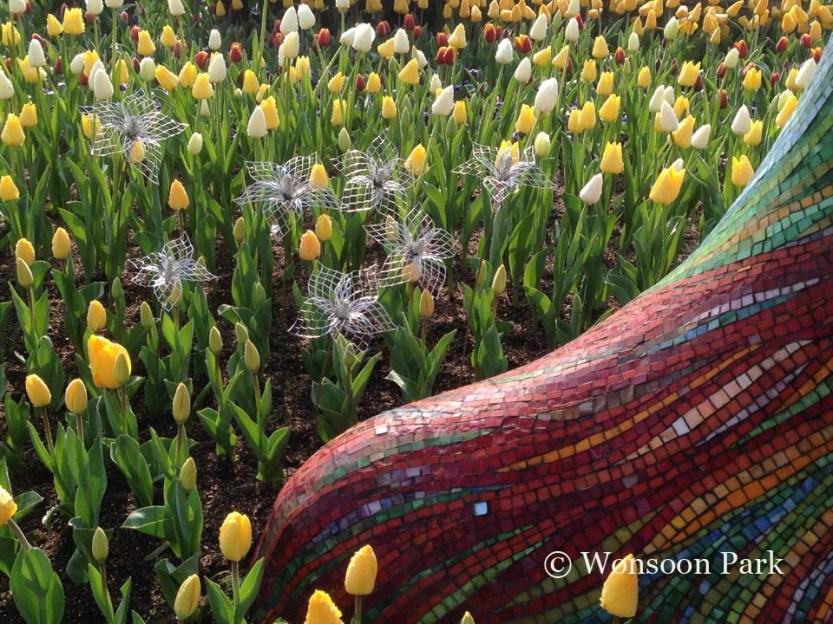 Tulips en masse at the Everland Park.