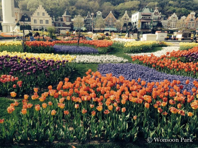 The tulip display at Samsung Everland Company