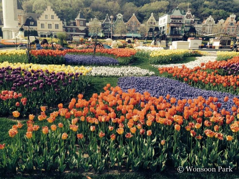 The tulip display at Samsung Everland Company