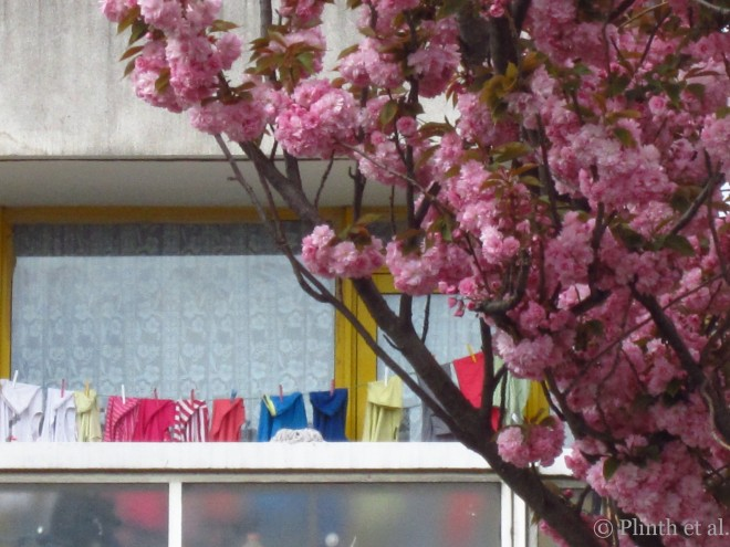 Prunus blooms and colorful washings, Colombia Road, London