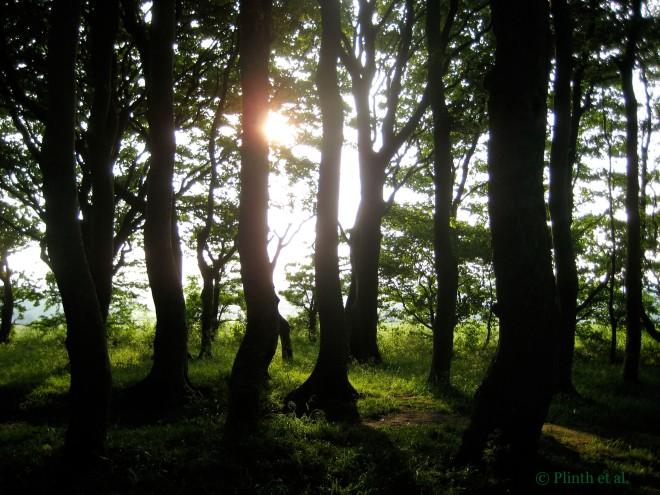 GroveofTrees