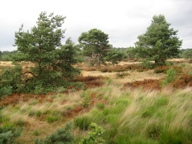 Hoge Veluwe National Park in Otterlo in the Netherlands