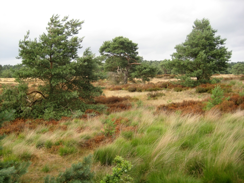 Hoge Veluwe National Park in Otterlo in the Netherlands