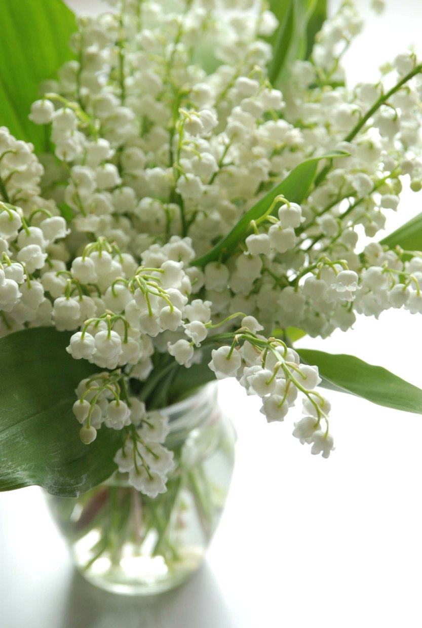 Lily_of_the_valley_bouquet