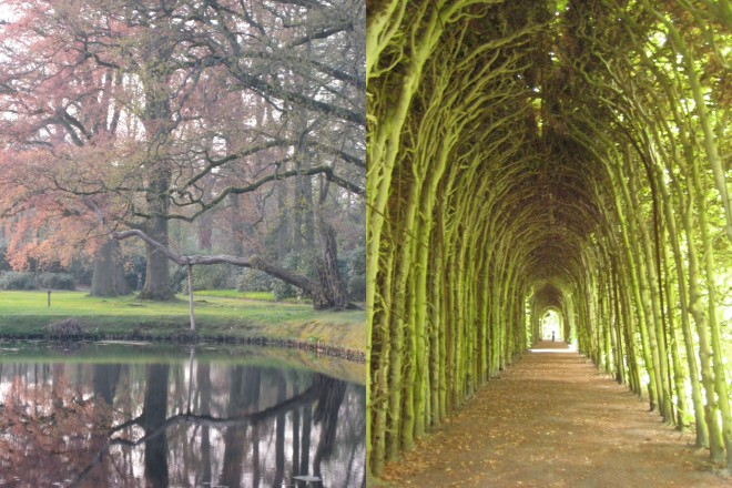 tree reflections at DeWiersse and Beech tunnel of 475' at Kasteel Weldam, Netherlands