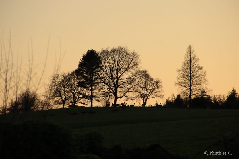 Winter silhouettes of trees and deer, Gravetye Manor, UK