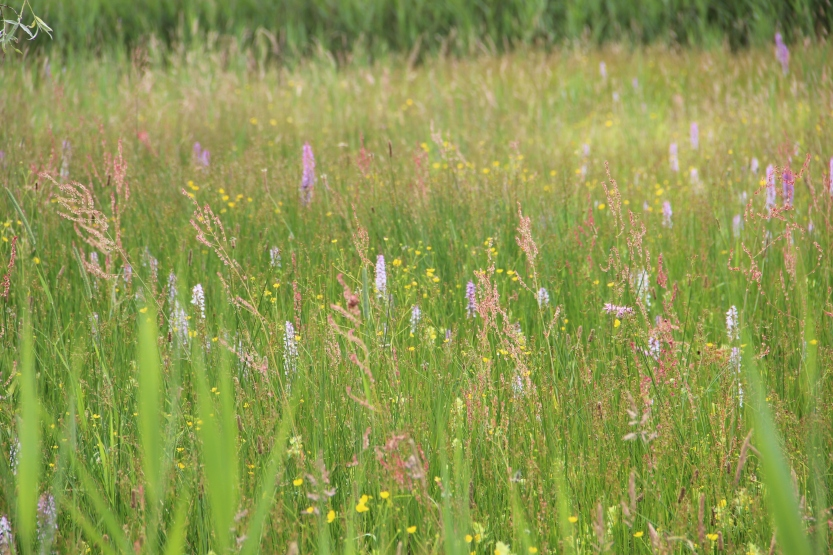 Nature reserve meadow