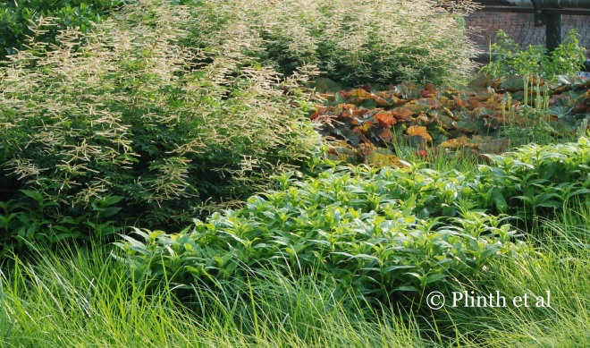 Aruncus 'Horatio' with carices, Heuchera villosa 'Brownies', and Tricyrtis at the High Line, New York