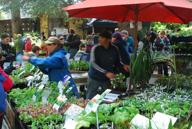 Plant buying frenzy at a rare plant fair in Australia