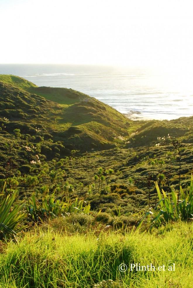 At the Hokianga Harbour near Oporoni, North Island, New Zealand, Cordyline australis, naturalized Cortaderia selloana and  Phormium tenax punctuate the tussocks of grasses and shrubs on the coast.