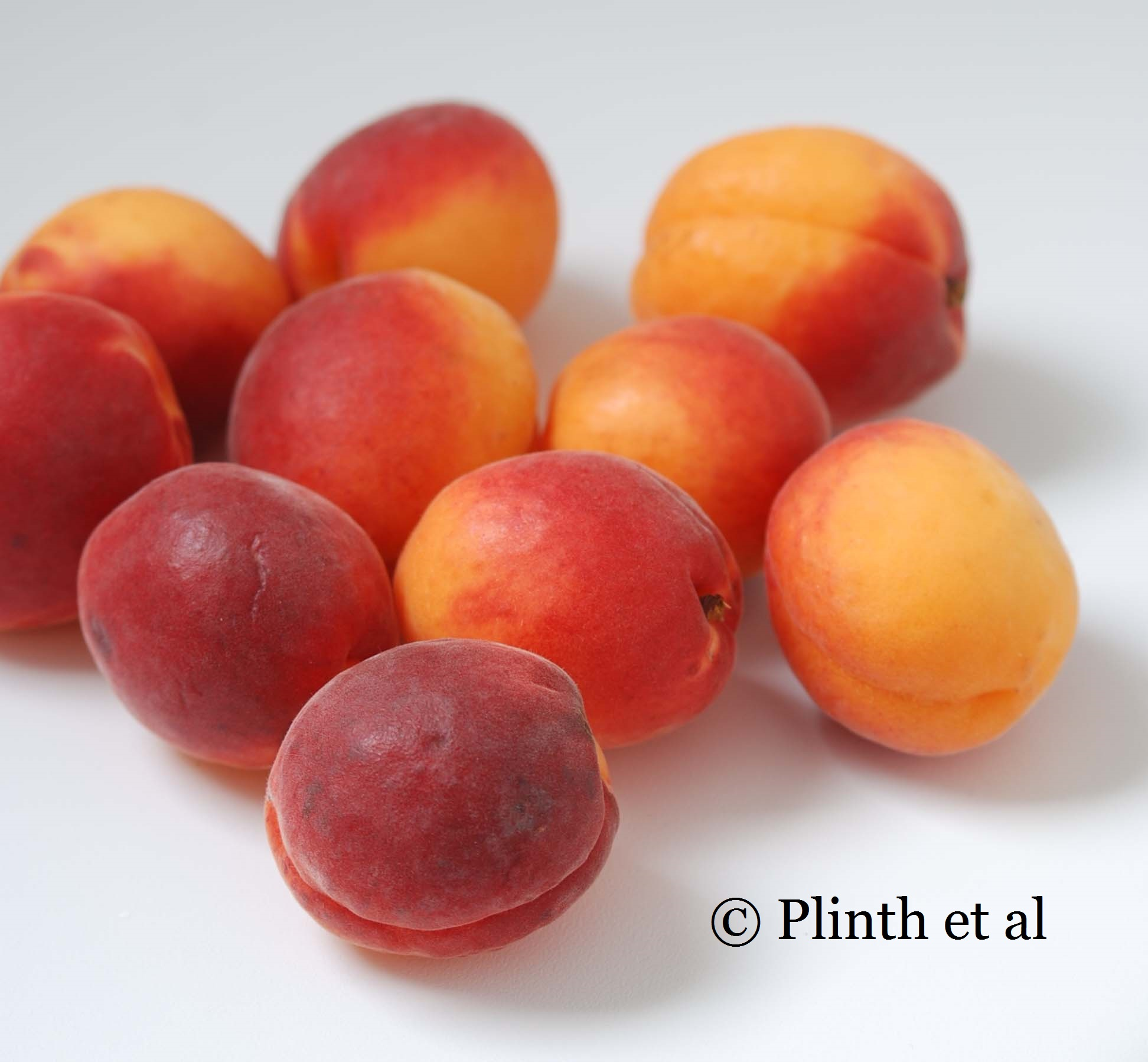 how to grow apricots in tasmania