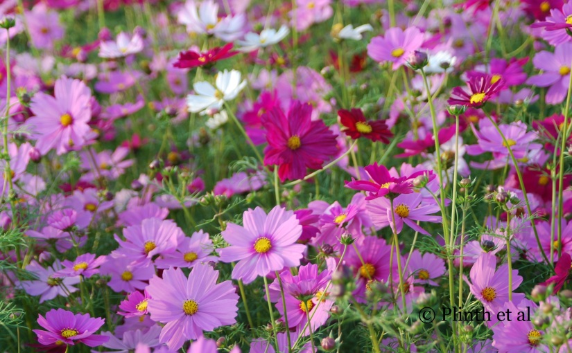 Annuals for LateSummer