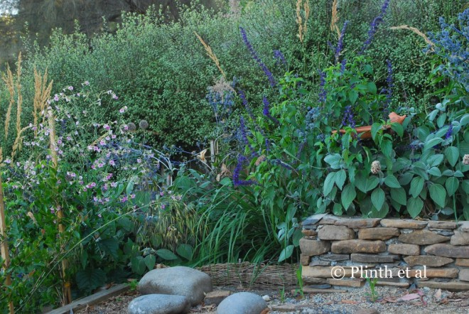 Not every planting was successful - Calamagrostis x acutiflora 'Karl Foerster' did not perform as anticipated, and its removal was earmarked. In its place we planned on adding more Echinops, Erygnium planum, and Salvia 'Indigo Spires'.
