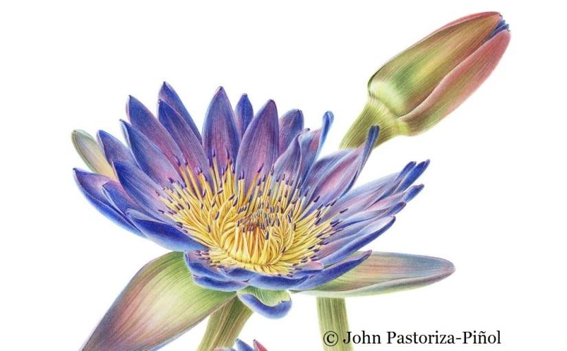 5-10-5: John Pastoriza-Piñol, botanicalillustrator