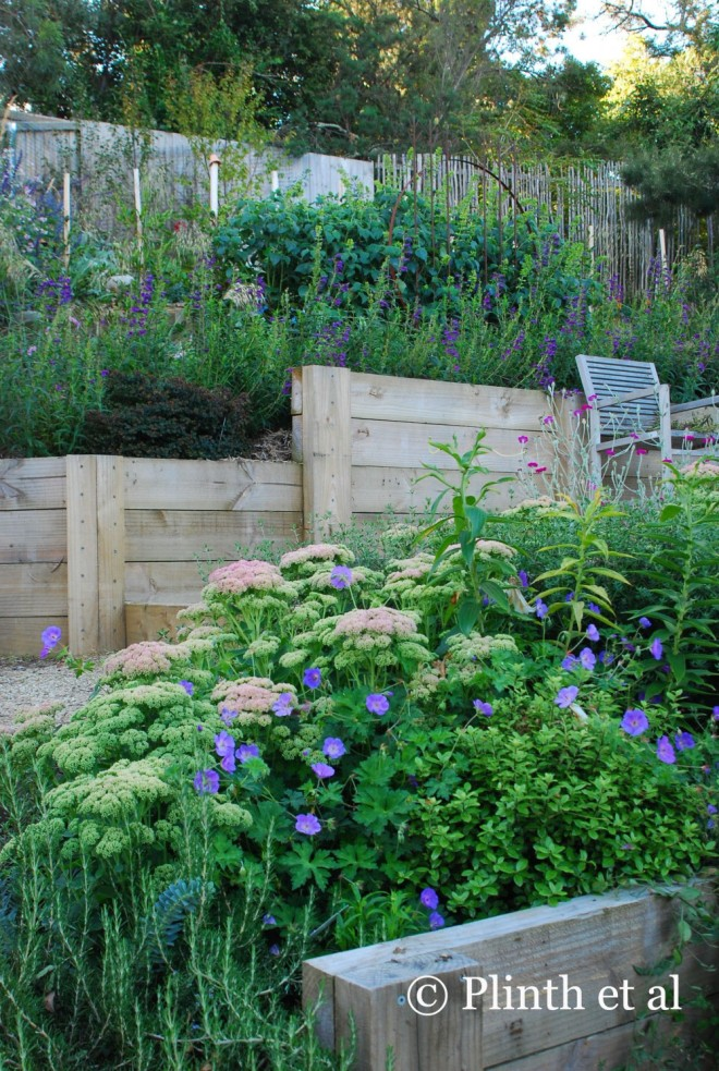 A view towards the top: The planting leans heavily towards blues and purples to reflect the Tasmanian skies - in the background we mixed Penstemon 'Sour Grapes', Salvia mexicana 'Limelight', and Dierama pulcherrimum with Stipa gigantea and Euphorbia x martinii, all of which are backed by a camellia hedge (where the stakes are).  In the foreground are Geranium Rozanne 'Gerwat' and Sedum 'Autumn Joy'.