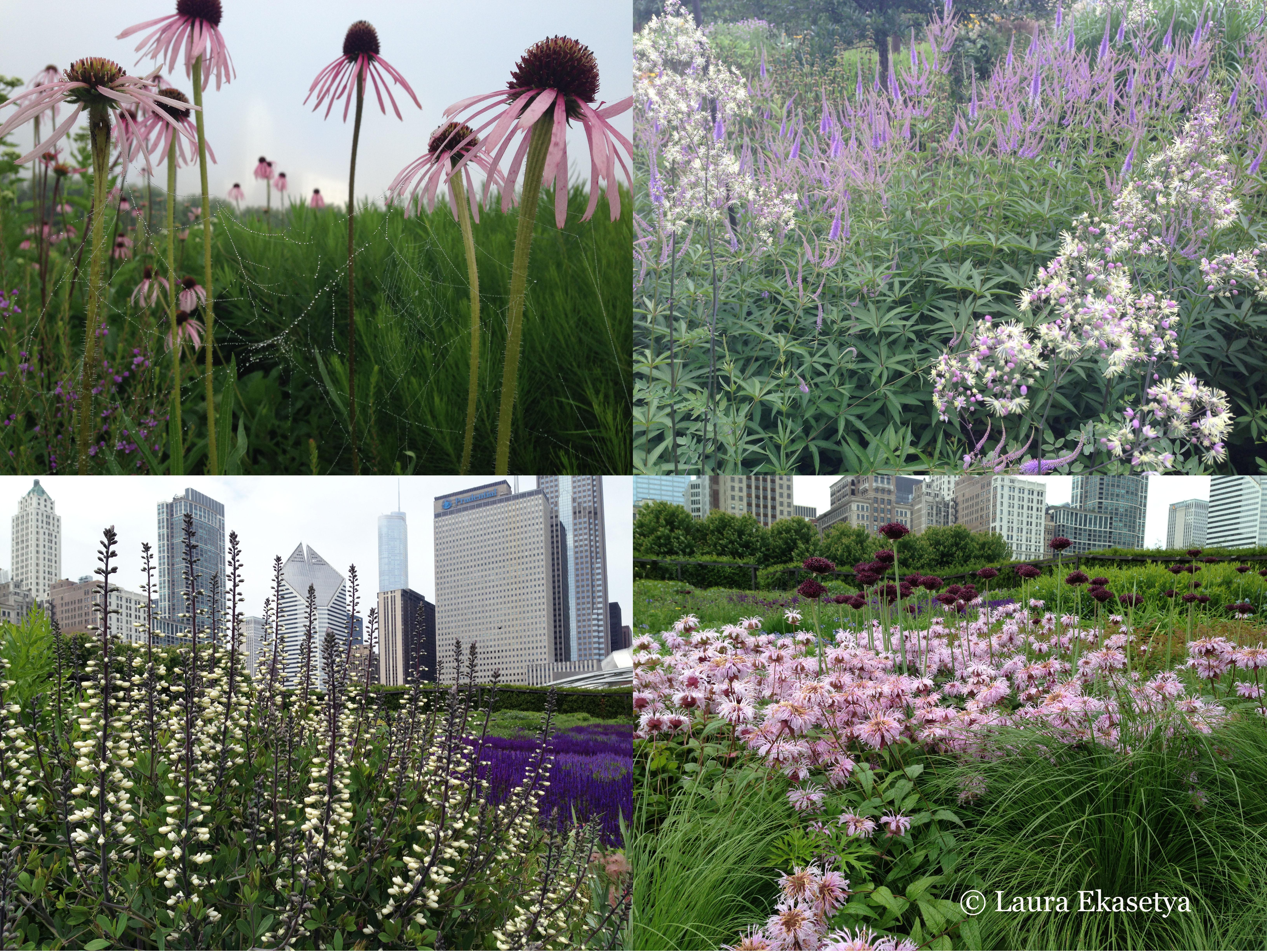 5 10 5 laura ekasetya horticulturist lurie garden for Lurie garden planting plan