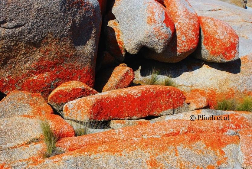 Orange lichen-encrusted rocks at Bay of Fires, Tasmania, Australia