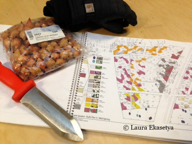 Laura carefully consults the detailed color-coded map of the plantings for the bulbs.